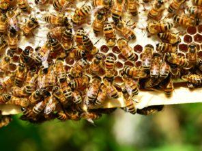 abeilles_ruche_cadre